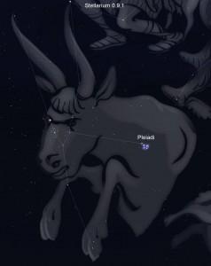 Costellazione del Toro, Pleiadi
